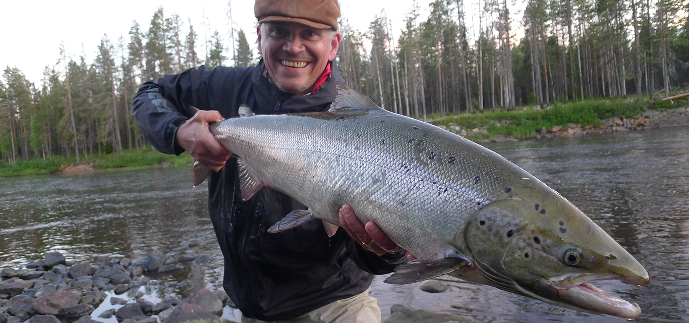 45 Råne river salmon - a unique salmon from Swedish Lapland.